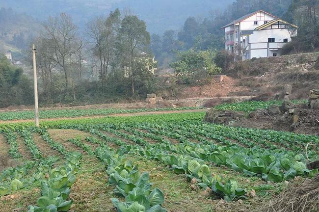 久中惠城的蔬菜